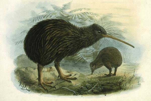 Kiwi Constraint Solver